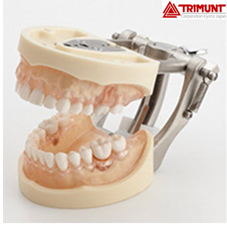 Trimunt Standard Periodontal Disease Model