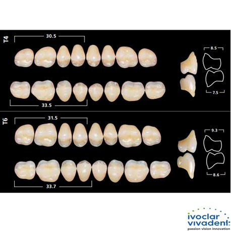 Ivoclar SR Orthotyp PE T Mould Posterior teeth(set of 8)