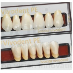 Ivoclar SR Vivodent PE Shade310/3A For Anterior teeth  (set of 6)