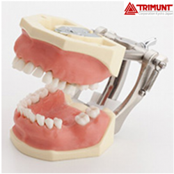 Trimunt Severe Periodontal Disease Model With Deep Pockets
